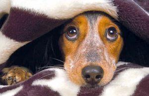 Mascotas-miedo-tormentas-revista-love-talavera