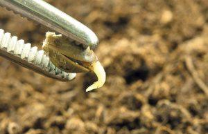 alkimia-semillas-para-el-cultivo-revista-love-talavera