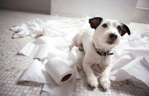 ansiedad-en-perros-revista-love-talavera