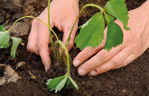 aprender-cultivo-de-interior-alkimia-revista-love-talavera