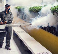 aumento-de-plagas-de-ratas-mosquitos-y-garrapatas-derivado-por-el-Coronavirus-revista-love-talavera