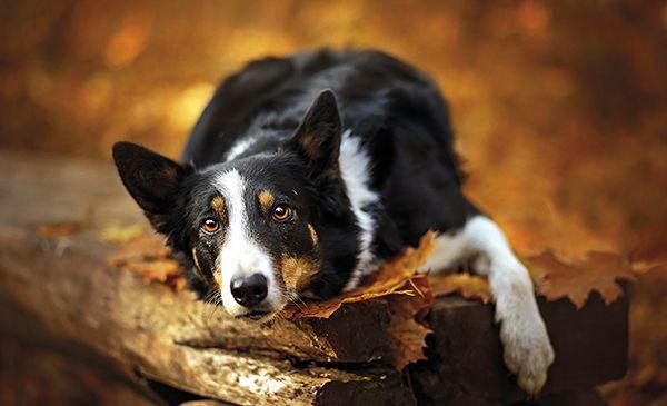 centro-veterinario-principe-mascotas3-dic15