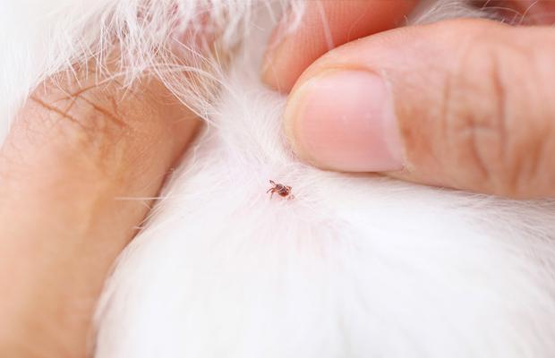 como-acabar-con-las-pulgas-en-casa-revista-love-talavera