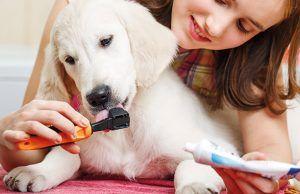 como-cuidar-dientes-perros-revista-love-talavera