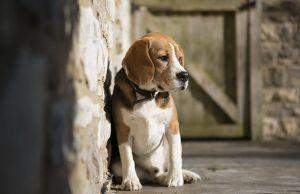 consejos-para-adoptar-un-perro-centro-veterinario-principe-revista-love-talavera-noviembre-2016