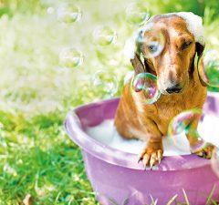 consejos-para-bano-seguro-y-agradable-en-mascotas-revista-love-talavera