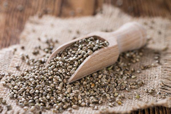contras-semillas-autoflorecientes-alkimia-revista-love-talavera