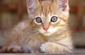 cuando-debe-ir-mascota-al-veterinario-revista-love-talavera