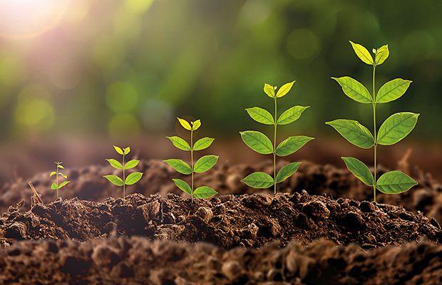 cuando-germinar-semillas-alkimia-revista-love-talavera