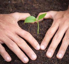 cultivar-semillas-autoflorecientes-revista-love-talavera