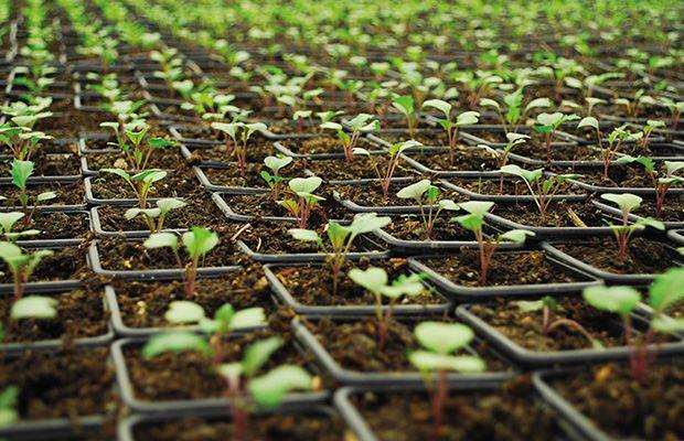El cultivo de interior alkimia talavera for Cultivo en interior