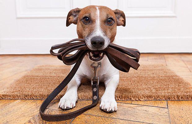 eduar-a-tu-cachorro-ensena-a-pasear-revista-love-talavera