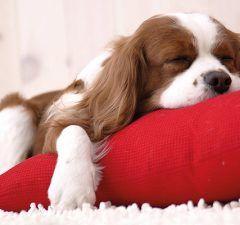 educar-a-tu-cachorro-a-dormir-revista-love-talavera