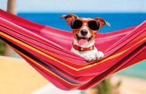 golpe-calor-mascotas-verano-revista-love-talavera