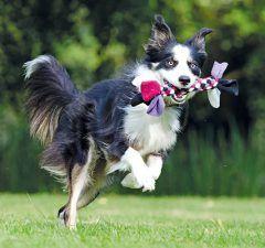 juegos-de-verano-mascotas-revista-love-talavera
