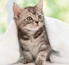 marzo-2017-revista-online-love-talavera-de-la-reina-mascotas-muda-gatos