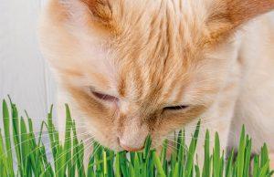 mascotas-bolas-de-pelo-en-gatos-revista-love-talavera