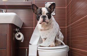 mascotas-educar-cachorro-necesidades-fuera-revista-love-talavera