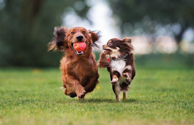 mascotas-ensenar-perro-a-ser-feliz-revista-love-talavera