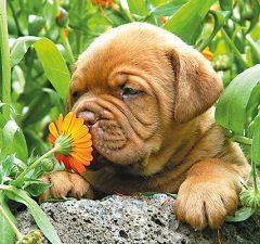 mascotas-juegos-de-olfato-revista-love-talavera