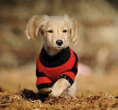 mascotas-otonio-veterinario-principe-revista-love-talavera-octubre