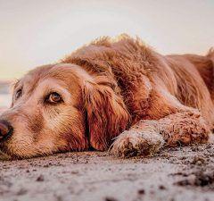 mascotas-playas-oficiales-2018-revista-love-talavera