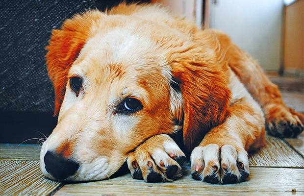 mascotas-vuelta-a-la-rutina-revista-love-talavera