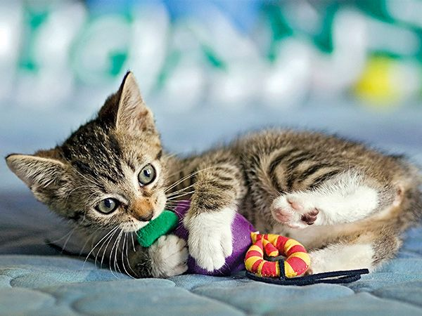 mascotas2-marzo-revista-love-talavera
