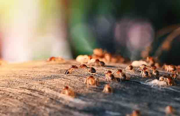 muebles-de-madera-tratamientos-para-evitar-termitas-y-carcomas-revista-love-talavera