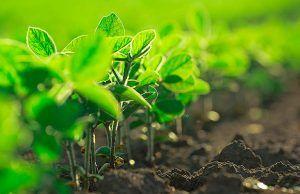 nutricion-y-abonos-plantacion-alkimia-talavera-revista-love-talavera