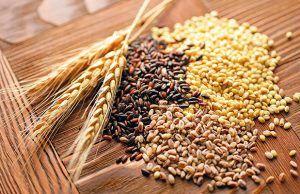 partes-del-grano-de-trigo-entreharinas-revista-love-talavera