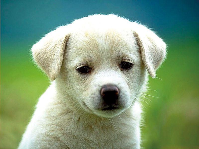 perro-cahorro
