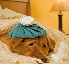 primeros-auxilios-mascotas-revista-love-talavera