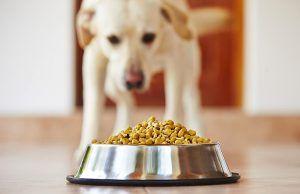 que-es-la-dieta-barf-mascotas-revista-love-talavera