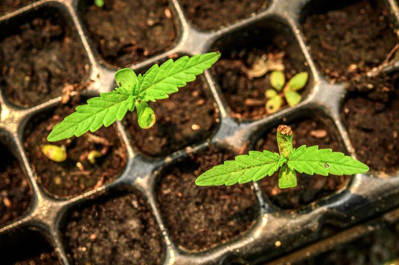 semillas-mejor-momento-plantar-alkimia-revista-love-talavera