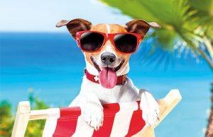 vacaciones-con-tu-mascota-factores-a-tener-en-cuenta-revista-love-talavera