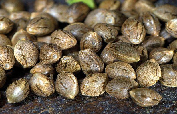 variedades-de-semillas-alkimia-revista-love-talavera