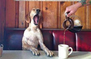 vuelta-a-la-rutina-en-mascotas-revista-love-talavera